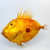 Animal Fish John Dory