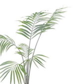Potted Kentia Palm Tree