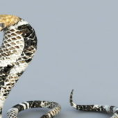 King Cobra African Snake