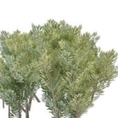Plant Green Landscaping Bushes