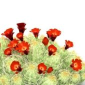 Garden Cactus With Red Flower