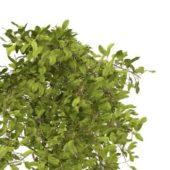 Green Landscaping Shrubs Plant