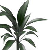 Green Large Broad Leaf Tree