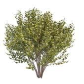 Large Bushes Tree