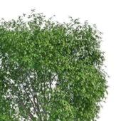 Plant Large Evergreen Shrubs
