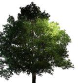Large Generic Garden Tree