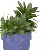 Leaf House Plant In Pot