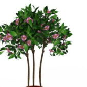 Green Large Potted Flowering Tree