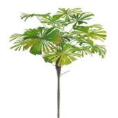 Nature Latania Palm Tree