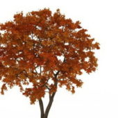 European Late Autumn Tree