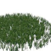 Green Lawn Grasses Plant