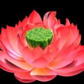 Nature Lotus Bloom