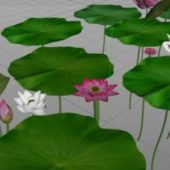 Nature Lotus Flowers With Leaves