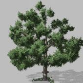 Garden Lush Tree