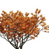 Magnolia Soulangeana Green Tree