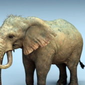 Animal Wild Mammoth Elephant