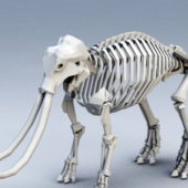 Animal Mammoth Skeleton
