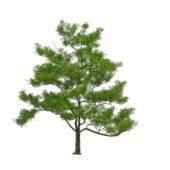 Medium Size Nature Mango Tree