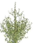 Plant Medium Sized Shrub