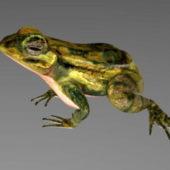 Mink Frog Animal Rig