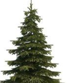 Mountain Spruce Green Tree