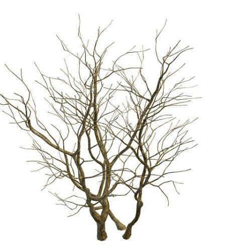 Winter Naked Tree