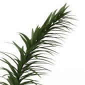 Narrow Green Leaf Plant