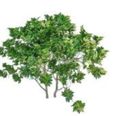 Nature Oak Tree Fruit
