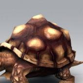Old Turtle Animal