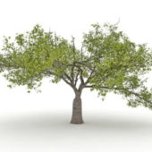 Nature Old Catalpa Tree