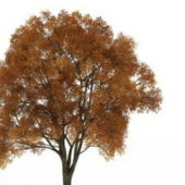 Old Green Tree With Fall Colors