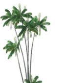 Oncosperma Tigillarium Coconut Tree