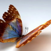 Orange Butterfly Animal