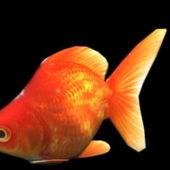 Wild Animal Orange Goldfish