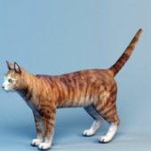 Animal Cat Shorthair Tabby