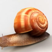 Animal Orange Snail