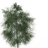 Oregon Ash Green Tree