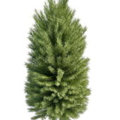 Nature Coniferous Pine