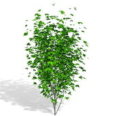 Plant Landscaping Tree