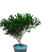 Garden Ornamental Plant Bonsai