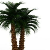 Outdoor Potted Palm Green Plants