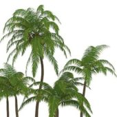 Green Palm Tree For Landscape