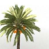 Green Palm Tree Coconuts