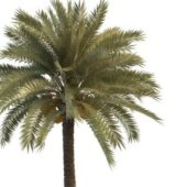 Green Palm Tree With Seeds