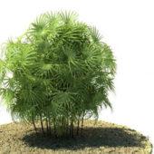 Palm Rhapis Excelsa Tree