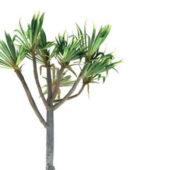 Pandanus Utilis Bory Palm Tree
