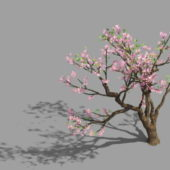 Peach Blossom Plant Tree