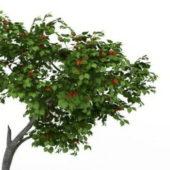 Green Persimmon Tree