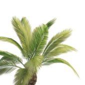 Phoenix Palm Green Tree