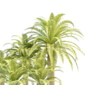 Plant Phoenix Palm Tree